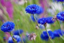 Gardening / by Leigh Ann DePope