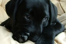 Puppiness and Other Furry Loves / by Jen Boulay
