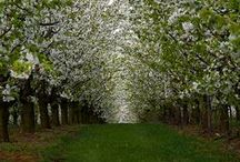 { spring time } / awakening, exuberance, celebration, hope / by Danna Lisa