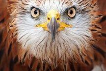 Birds / by Renee Rodman
