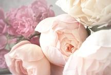 flower me happy / by Shalon Estrada