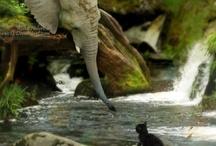 Animals Around The World. / by Elyse Buckingham
