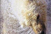 All Gods animals / by Pauline Clarke