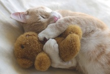 Furry Cute / Cute and lovely animals that make me smile / by Alexandra Dove
