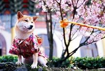 Japan / だって日本はすごいです。 / by Alexandra Dove