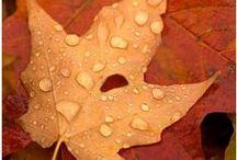 Autumn / by Sedona Lace