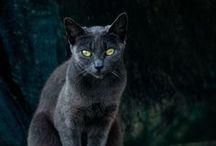 Cats cats cats / by Carolina Mora