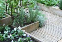 Gardening / My future garden.  / by Carol Ann Kaplan