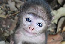 Primates / by Sharon Adams
