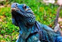 Reptiles / by Sharon Adams