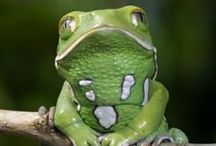 Amphibians / by Sharon Adams