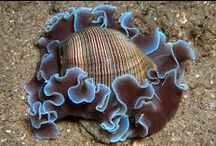 Shells / by Sharon Adams