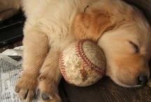 Dogs <3 <3 / by Brandi Heffner-Schmoyer