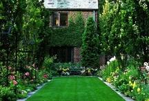 Gardens / by Kathy Prondzinski