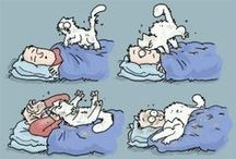 Simon's Cat / A board inspired by everyone's favorite feline, Simon's Cat. / by Open Road