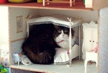 I love Dollhouse Miniatures / by Beth McDonald
