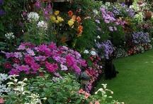 Gardens / by Holly Davis