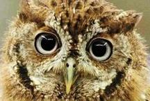Owl Always Love You / by Holly Davis