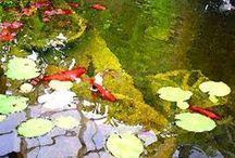 pond ideas / by Keve Butterfield