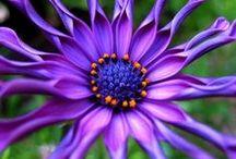 purple / by Keve Butterfield