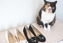Sarenza ♥ Cats & Shoes / lol-cats & shoes / by Sarenza