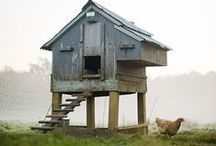 Chicken Coops / Thinking about getting some chickens this summer here at Liberty Paper and love looking at all these great ideas for coops and all things chicken. / by Claudia Lee