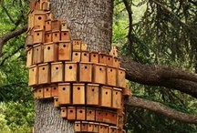 Bird Feeders & Houses / by Cathleen Buescher-telle