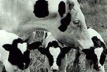 Dumping Dairy / by Bea Elliott