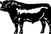 breeds-cattle / by Gloria Thompson