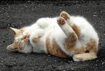 animalistic ~ i love cats  / by Nḭ̃c̰̃õ̰l̰̃ḛ̃