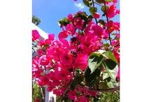 Florida Garden / by Naples Botanical Garden