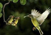 Birds / by Sue Bemiss