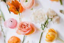 Fleurs / by Hannah Janzen (nee Robinson)