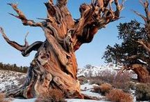 Tremenedous Trees / by Kim McDougald
