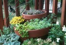 Container Gardening / by Doug Green