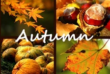 HAPPY FALL YA'LL / Fall and Thanksgiving ideas. / by Diane Marecki Casteel