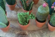 Cactus / by Rose Virginia
