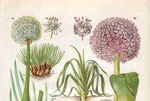 Botánica / by Román Vélez