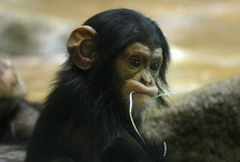 I <3 Monkeys / by Melissa DeGeorge