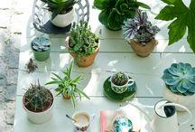 Indoor plants / by Geraldine Tan of littlebigbell.com