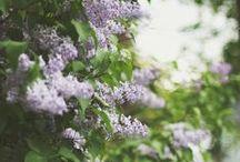 Garden / by Lindsay Parke