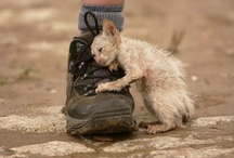 Remember to help, every little bit counts.  / by Kathryn Soucy