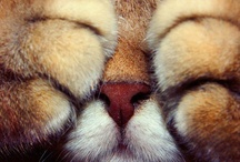 ♥ Can you say 'Awww' ♥ / by Kimi Springer