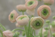 | flores | jardins | / by Cris Monteiro