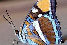 butterflies / by Carolyn Dube