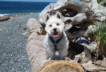 All Things Westie! / by Karen Johnson
