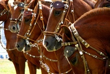A Horses 2 , Hester ,Pferde ,Soquili , Chevaux , Caballos , 馬 , лошади , Paardjes  / While perusing this board, if you notice a duplicate pin, PLEASE comment it to me. I will delete the offender. I dislike repeating myself but sometimes it happens. / by Christa Gettys