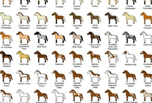 Horses-Colors & Patterns / by Christa Gettys