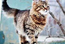 Pussycat pussycat where have you been? / Cat, kitten, kitties, kits, feline / by Kimberly Johnson