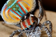 Animal Kingdom - Spiders / terrifyingly beautiful / by Susie